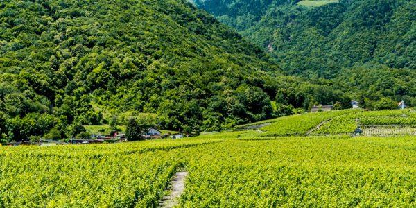 vin-tourisme